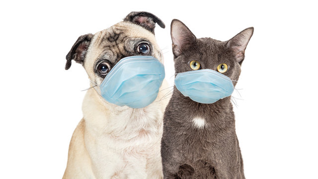 Cat and Dog Wearing Protective Surgical Face Masks