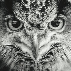 Wall Murals Hand drawn Sketch of animals Close-up Portrait Of An Owl