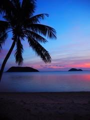 Photo sur Aluminium Dauphins Silhouette Coconut Palm Tree On Beach Against Sky