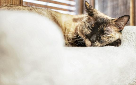 kitten lying down symbol yoga relaxation effect