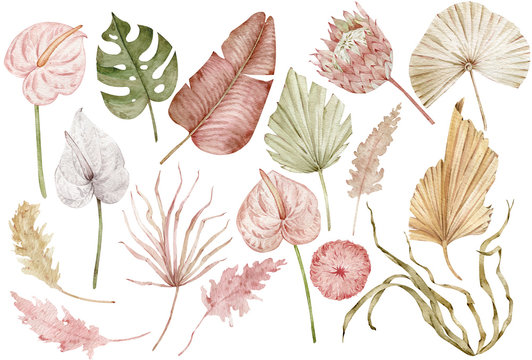 Watercolor tropical clipart with palm leaves, protea and anthurium flowers, dried grass. Exotic set