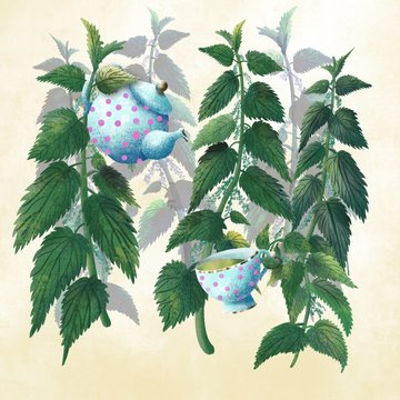 Stinging nettle, teapot and tea cup digital drawing in flat style