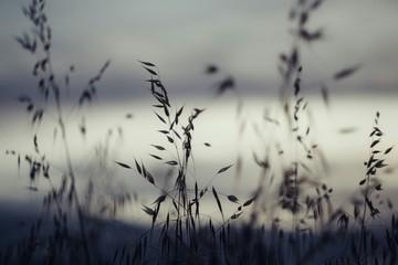 Fototapeta Close-up Of Stalks Against Blurred Background
