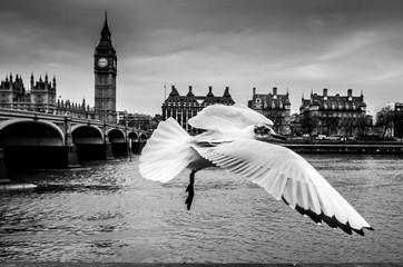 Close-up Of Bird Flying Over River Thames Wall mural