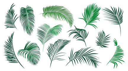 ..Set of various palm leaves. Colored vector elements of exotic nature on a white background.. Realistic sketch.  . Wall mural