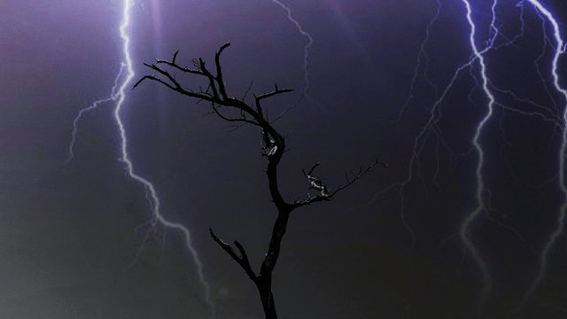 View Of Lightning Over Bare Tree