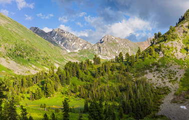 Wall Mural - Mountain valley in early summer, fresh greens of forests and meadows