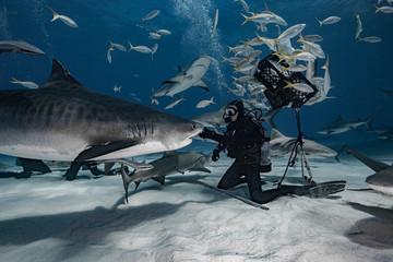Shark feeding in the Bahamas Fototapete