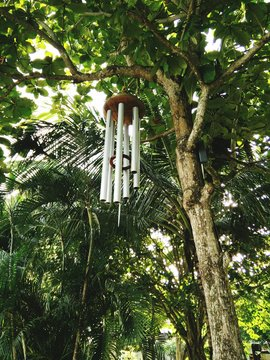 Low Angle View Of Wind Chime Hanging From Tree