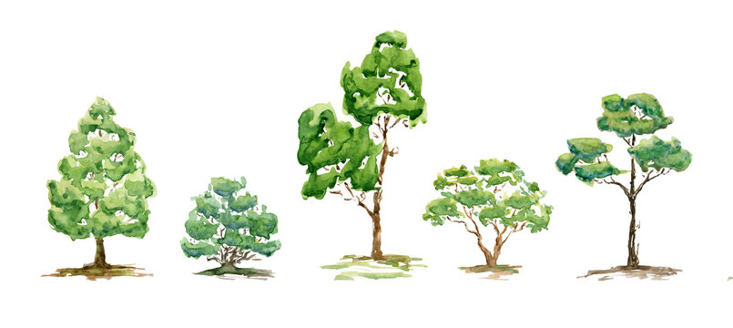 Watercolor summer trees, bush. Set of hand drawn green plants for background, poster, banner. Landscape. Nature