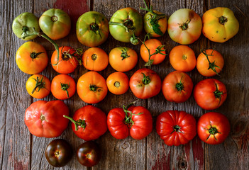 Colorful tomatoes, red, green, yellow and purple