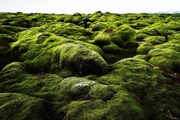 Obraz Moss Covered Rocks On Landscape - fototapety do salonu