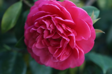 Poster de jardin Rose paysage d'un jardin fleuri au printemps