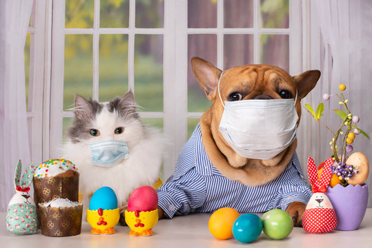 white fluffy cat and dog french bulldog in a medical mask during quarantine are sitting alone at the easter table against the background of the window