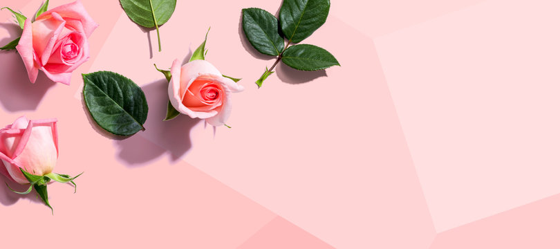 Pink roses with green leaves overhead view - flat lay