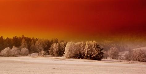 Fototapeten Rot kubanischen Trees On Snow Covered Landscape