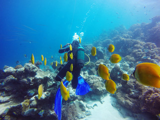 Canvas Prints Coral reefs Scuba Diver Swimming With Yellow Fishes In Sea