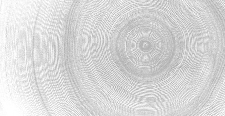 Gray and white detail of wood texture. Felled tree trunk or stump. Tight organic tree rings with close up of end grain.