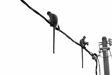 Low Angle View Of Monkeys Sitting On Cable Against Sky