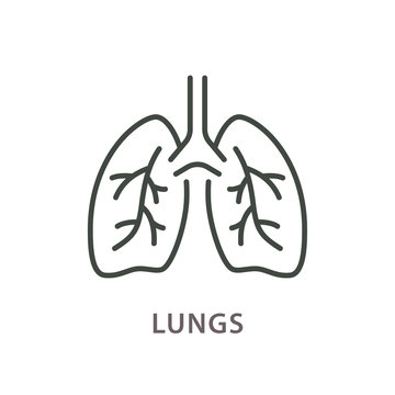 Human lungs line icon on white background.