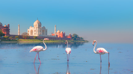 Taj Mahal mausoleum reflected in Yamuna river with a group of flamingo - Agra, Uttar Pradesh, India Fototapete
