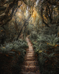 Pathway in New Zealand tropical jungle
