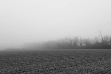 Fototapeta Farm During Foggy Weather