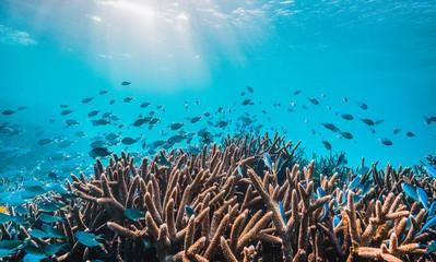 Colorful coral reef underwater scene Wall mural