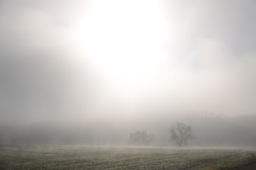 Aluminium Prints Dark grey Scenic View Of Grassy Field In Foggy Weather