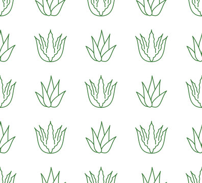 Aloe vera background, agave plant seamless pattern. Succulent wallpaper with line icons of aloevera leaves. Herbal medicine vector illustration green white color