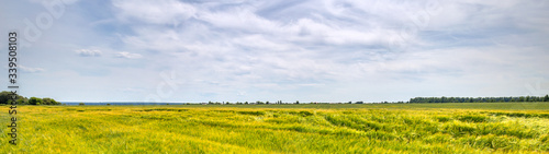 Fototapete Scenic view of Wheat Field and bright blue sky with cumulus and cirrus. Rural summer Landscape. Beauty nature, Agriculture and seasonal Harvest time. Cultivation cereals. Agribusiness. Panoramic view