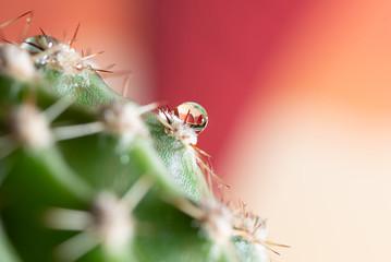 Autocollant pour porte Nature cactusdroplet
