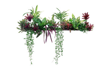 Wall Mural - Tropical plants bush decor (hanging Dischidia, Bromeliad, Dracaena, Begonia, Bird's nest fern) indoor garden houseplant nature backdrop, vertical garden wall planter isolated on white, clipping path.