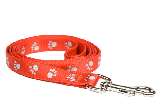 Red nylon dog lead or leash with paw print pattern isolated on white. Clipping path included.