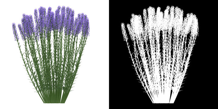 Front view of tree (Lavandula Angustifolia) png with alpha channel to cutout 3D rendering