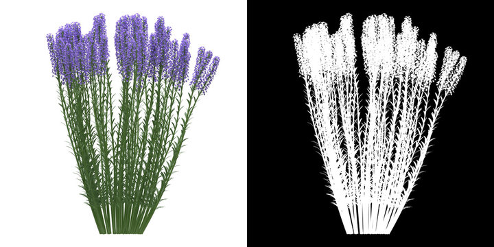 Left view of tree (Lavandula Angustifolia) png with alpha channel to cutout 3D rendering