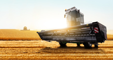 Wall Mural - Combine harvester on the wheat field.