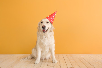 Cute dog in party hat on color background
