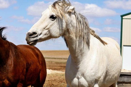 Beautiful horse on pasture.   Pastures on small acreage can mean better grazing for your horses. Many horse owners try to keep their horses on pasture.