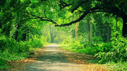 Wall Murals Road in forest Narrow Pathway Along Trees In Forest