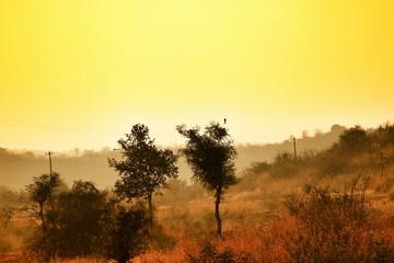 Foto auf Gartenposter Gelb Schwefelsäure Scenic View Of Landscape Against Sky During Foggy Weather