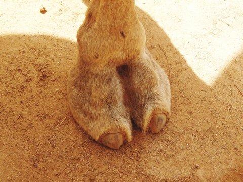 Camel toe photos