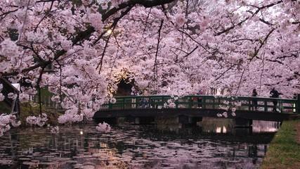 Obraz Bridge Over The Lake Wit Flower Tree In Foreground - fototapety do salonu