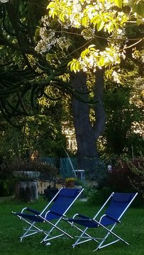 Deck Chairs On Grass