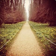 Fototapeten Kastanienbraun Narrow Pathway Along Landscape