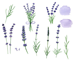 Set of lavender flowers, bouquet lavender, isolated white background, watercolor illustration, hand-drawn