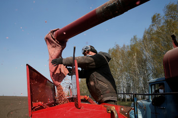 An agricultural worker loads soybean seeds into a sowing machine in Kiev region