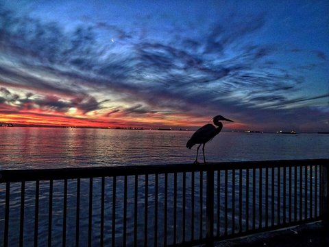 Silhouette Bird Perching On Railing By Sea Against Sky