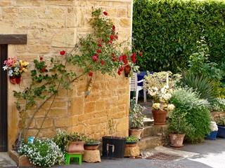 Fototapeta Potted Plants And Flowers On Footpath Against Wall obraz