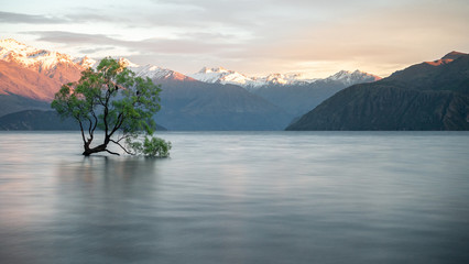 Papiers peints Vieux rose Willow tree growing in the middle of lake with mountains backdrop. Shot of famous Wanaka Tree from New Zealand made during sunrise.